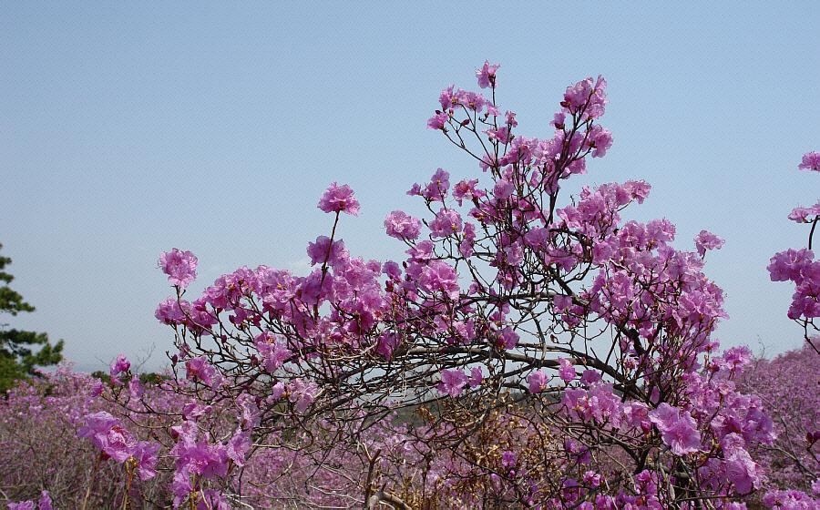 goryeosan-2010-05-02-1218.jpg