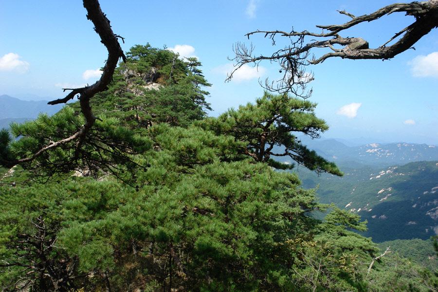 joryeongsan-2010-10-06-1142.jpg