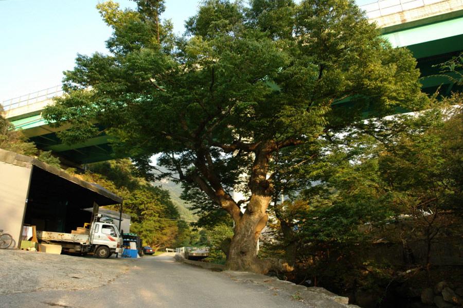 joryeongsan-2010-10-06-1297.jpg