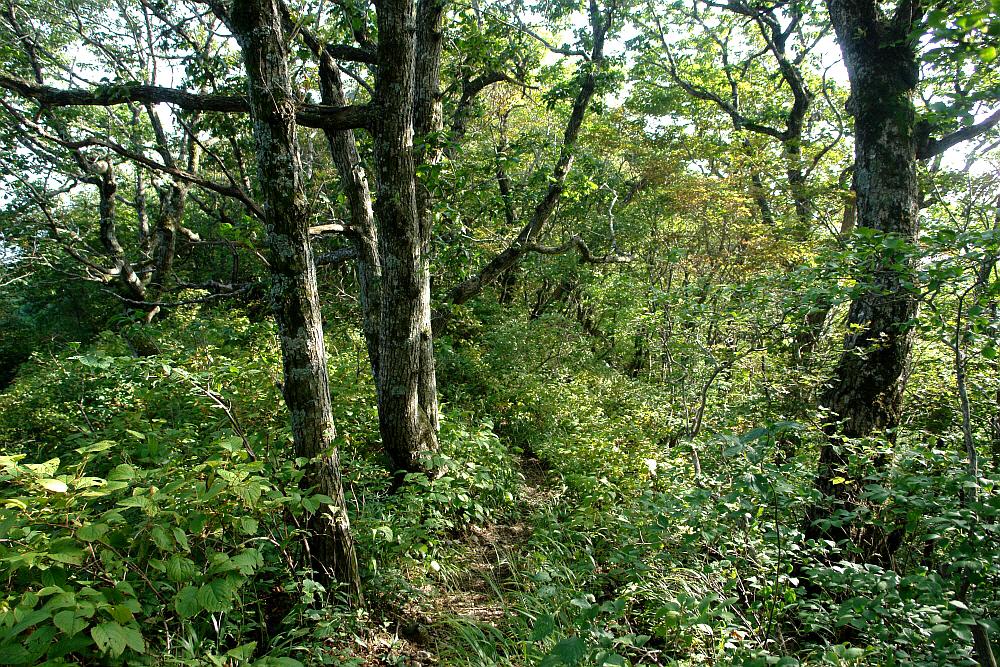 odaesan-2010-09-17-1132.JPG