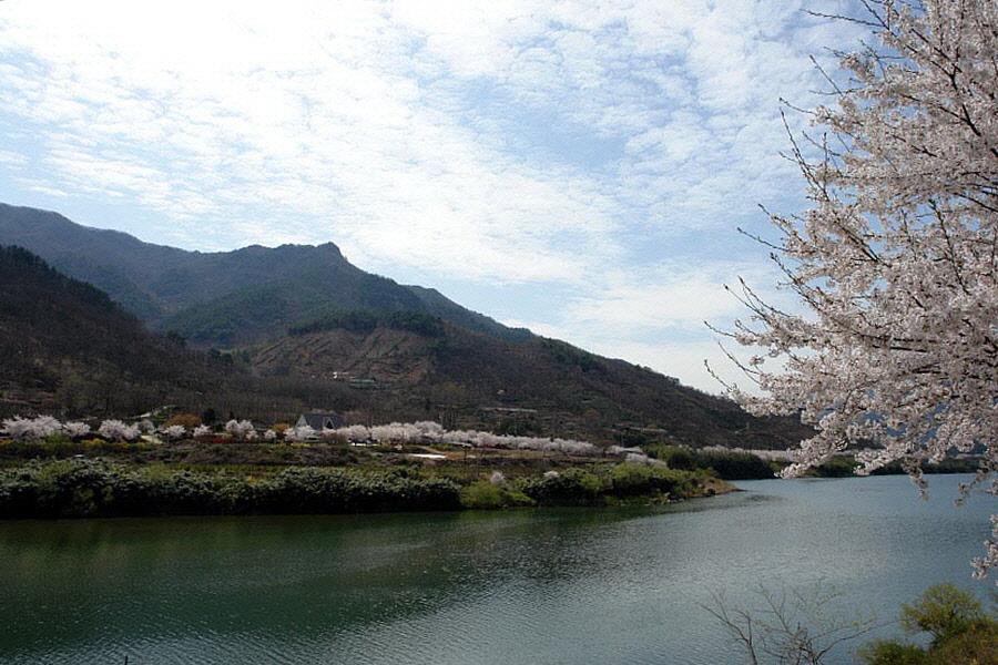 seomjingang-2010-04-09-184.jpg