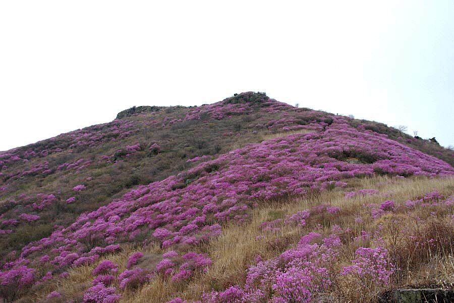 yeongchwisan-2010-04-09-1049.jpg