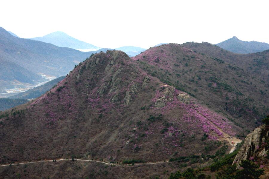 yeongchwisan-2010-04-09-1075.jpg