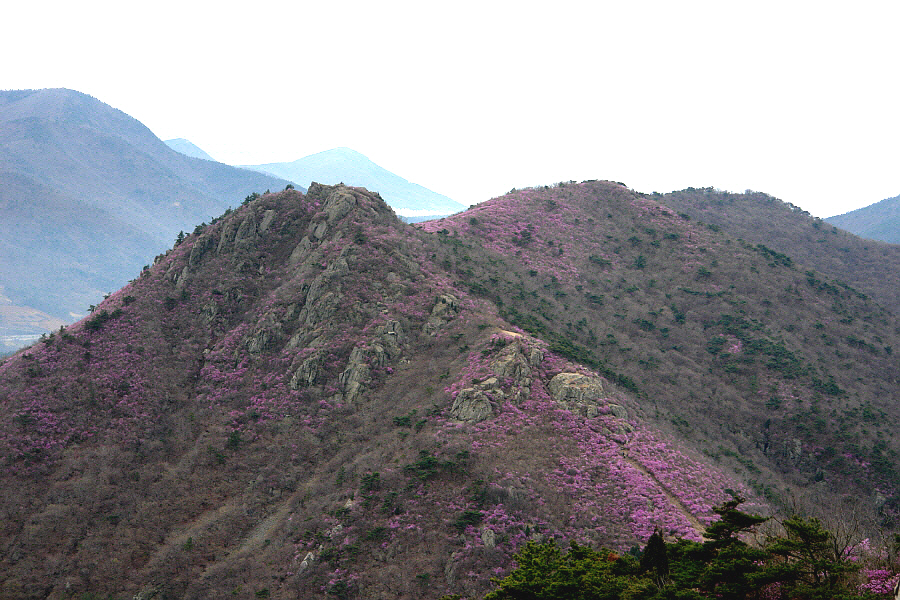 yeongchwisan-2010-04-09-1088.jpg