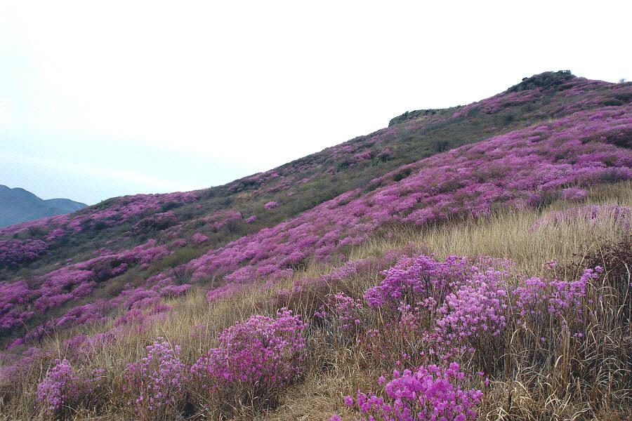 yeongchwisan-2010-04-09-1131.jpg
