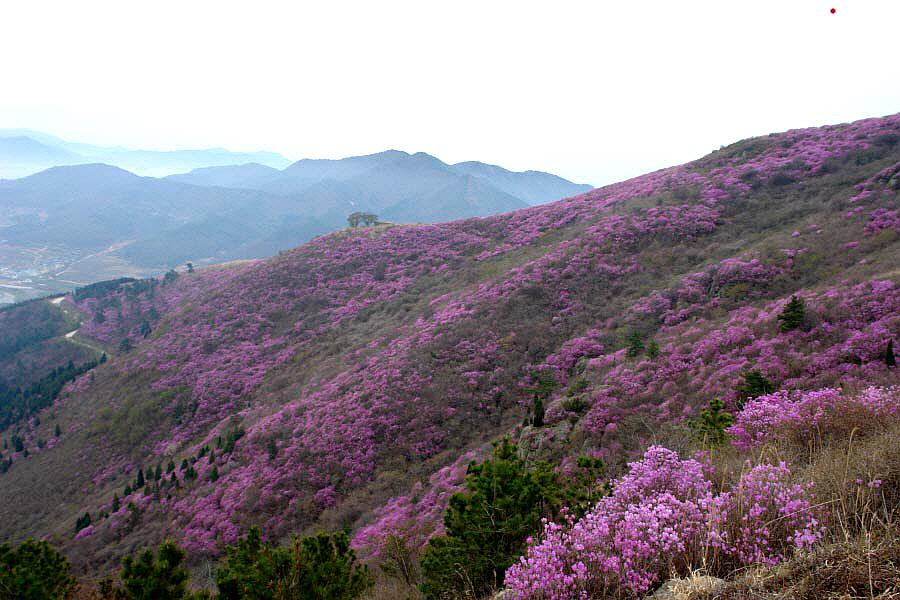 yeongchwisan-2010-04-09-1146.jpg
