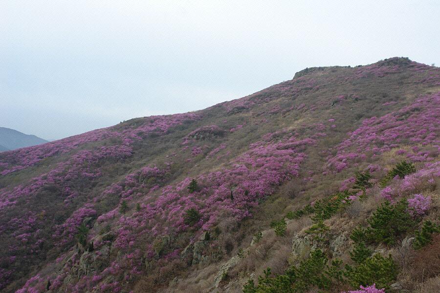 yeongchwisan-2010-04-09-1161.jpg