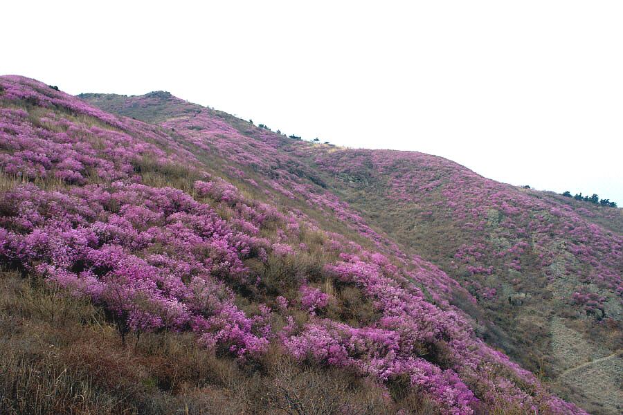 yeongchwisan-2010-04-09-1185.jpg