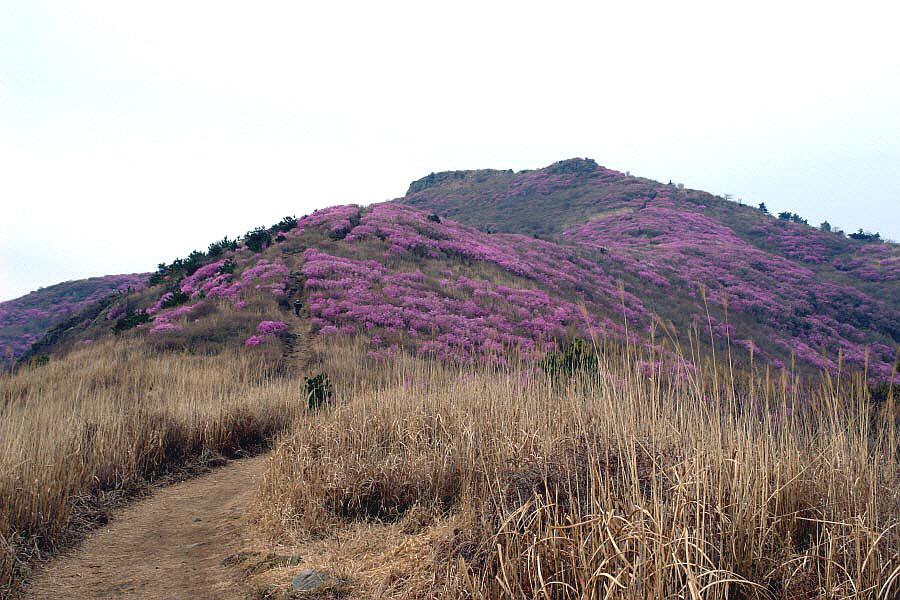 yeongchwisan-2010-04-09-1192.jpg