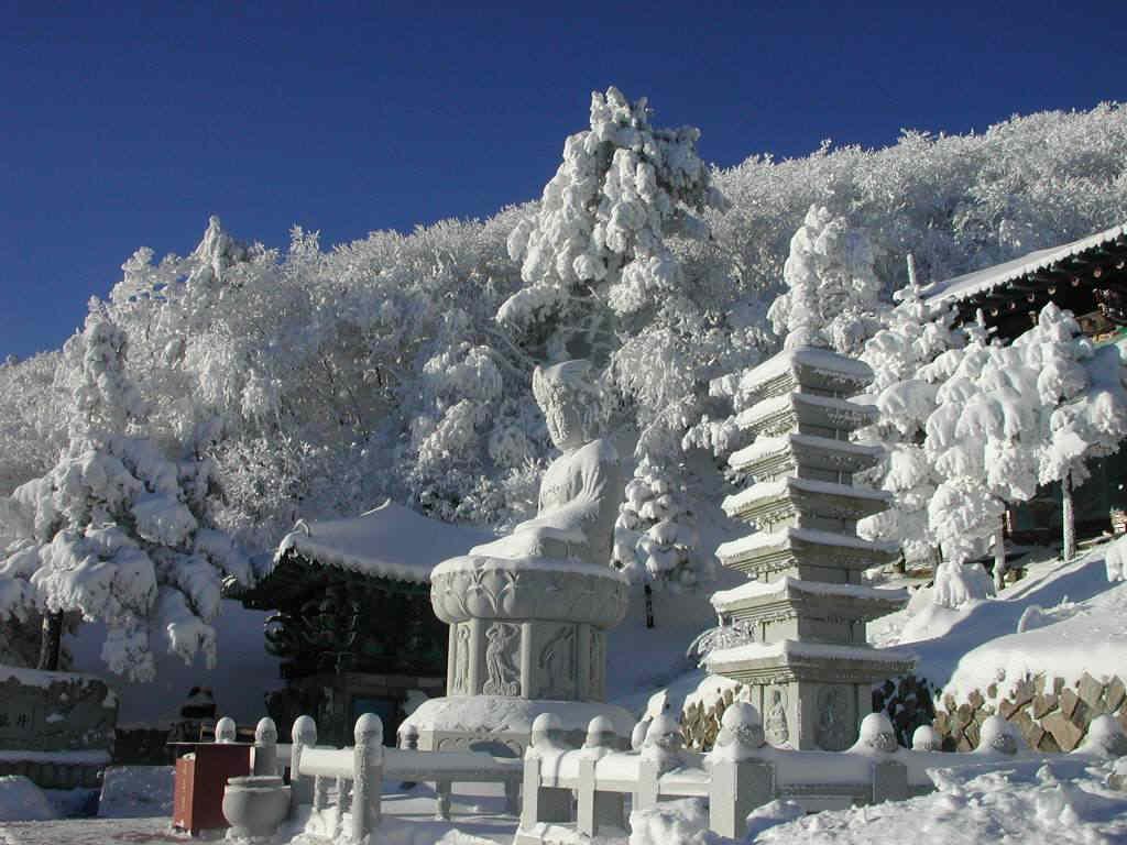 net_taebaeg_snow_2002_39.jpg