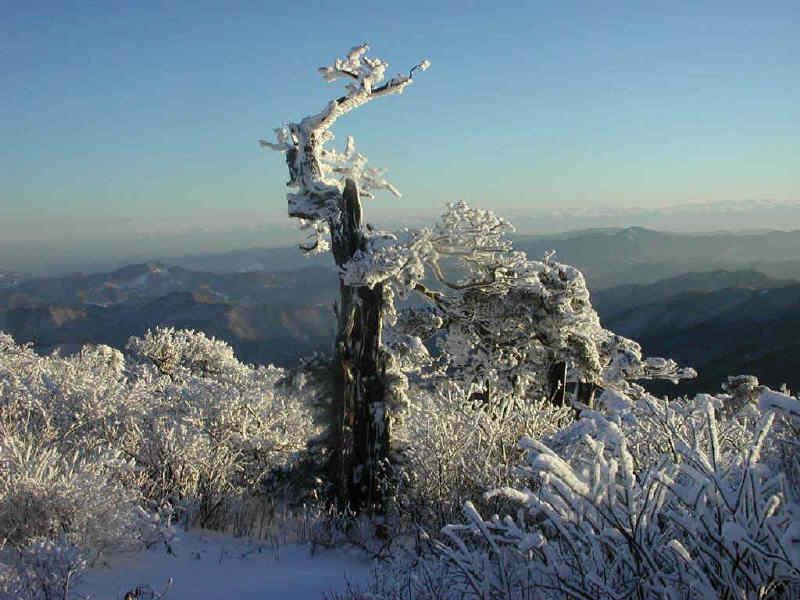 net_taebaeg_snow_2002_87.jpg