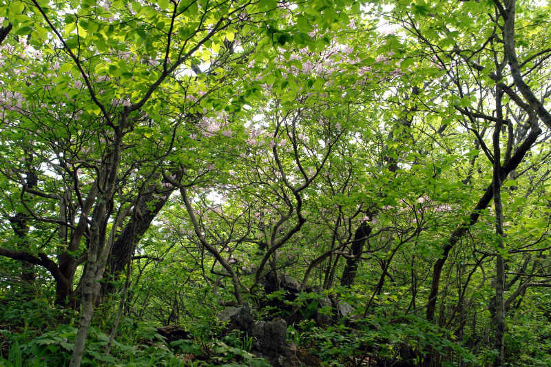 myeongjisan_2006_05_31_112.jpg