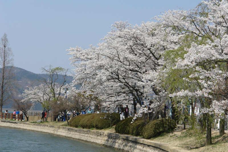 gyeongju-2007-0407-1019.jpg
