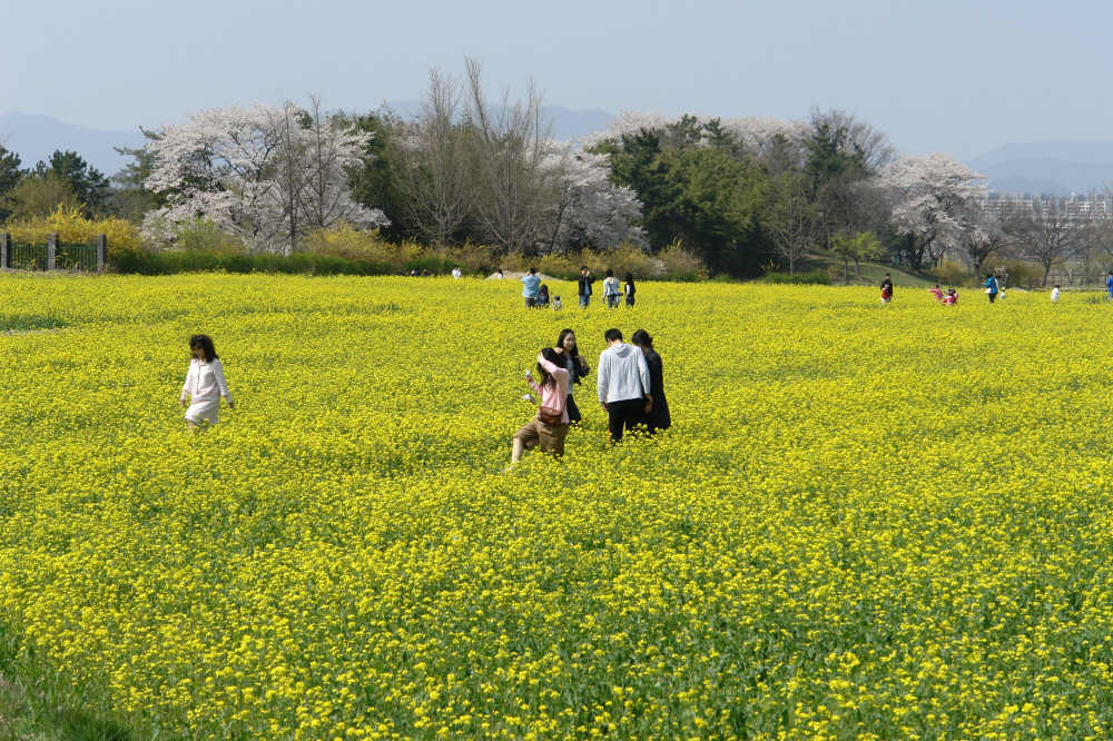 gyeongju-2007-0407-1104.jpg