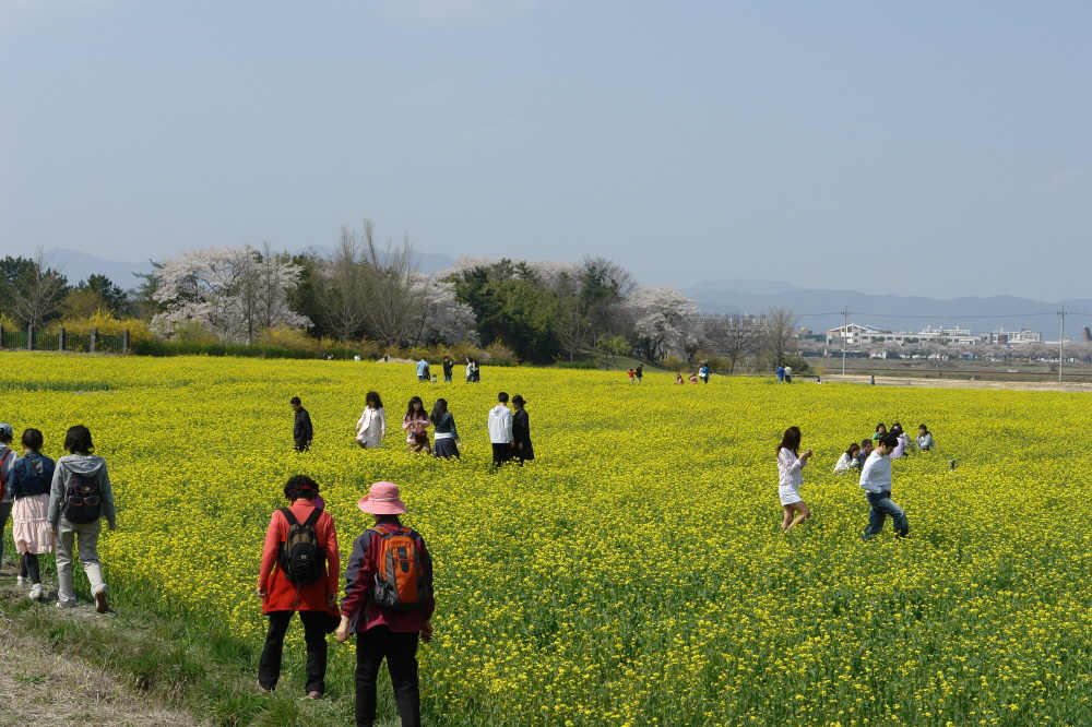 gyeongju-2007-0407-2006.jpg