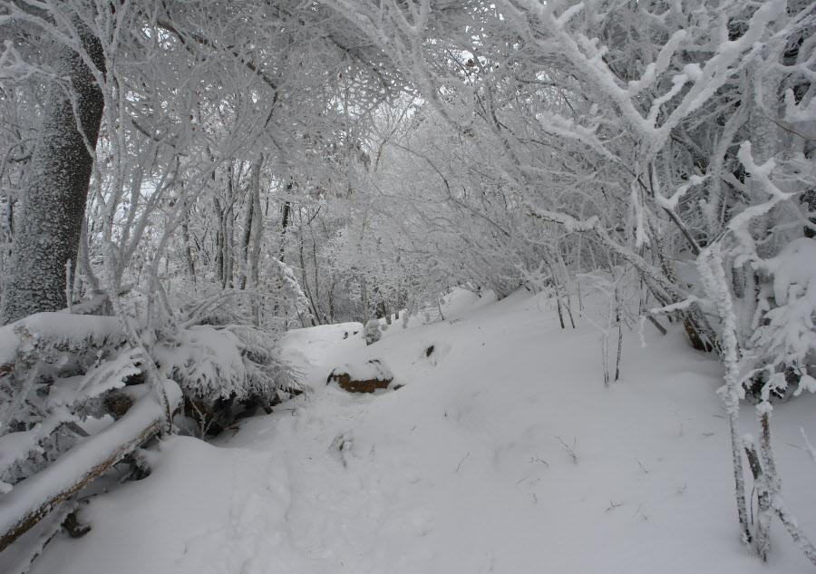 jirisan-2009-01-12_15-1056.jpg