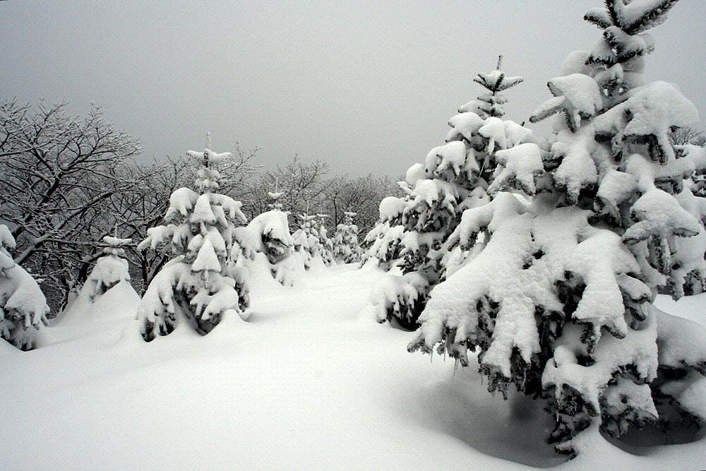 seonjaryeong-2010-02-16-127.jpg