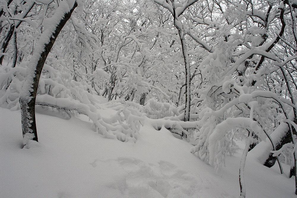 seonjaryeong-2010-02-16-132.jpg