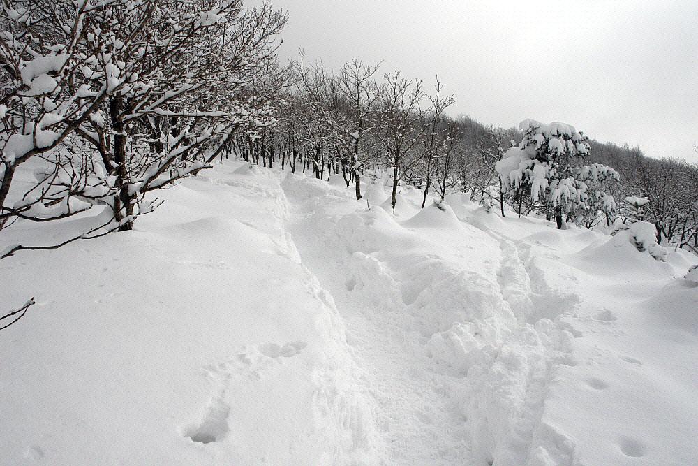 seonjaryeong-2010-02-16-142.jpg