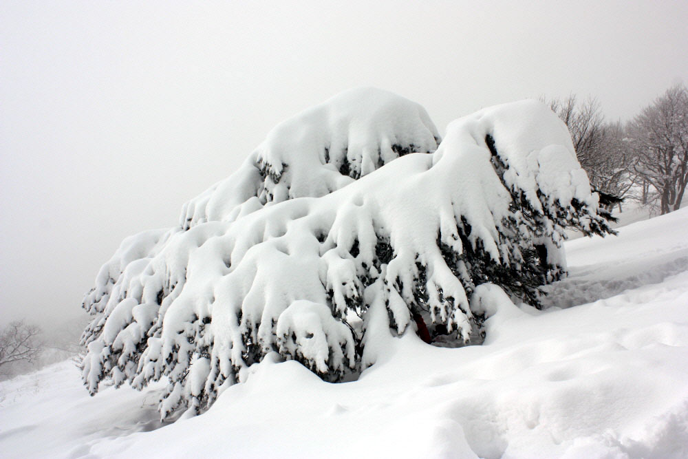 seonjaryeong-2010-02-16-220.jpg