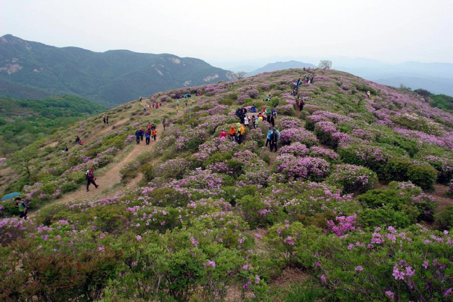 hwangmaesan-2012-05-13-1009.JPG