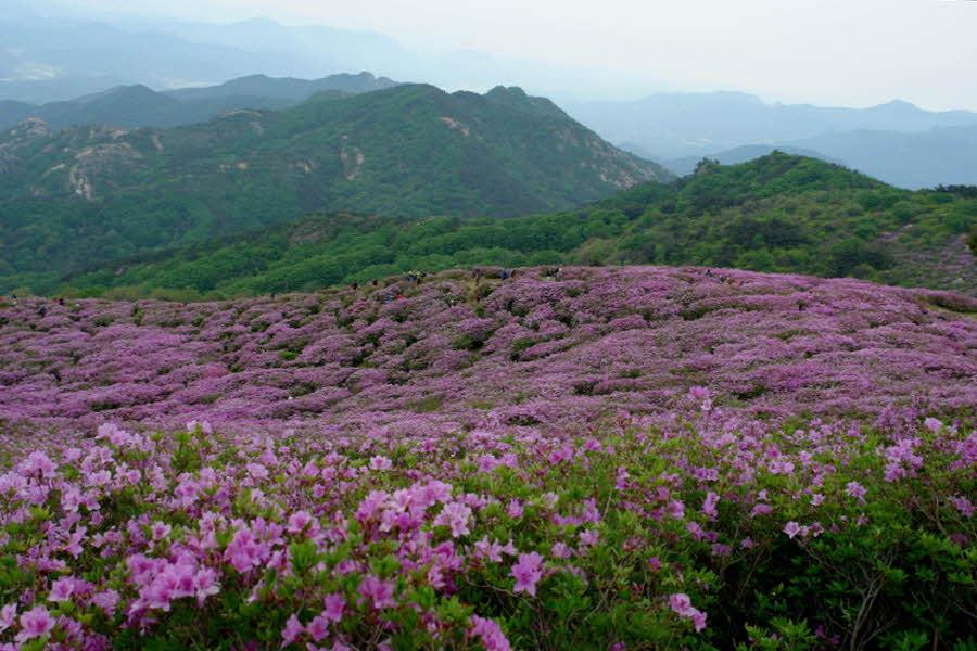 hwangmaesan-2012-05-13-1025.JPG