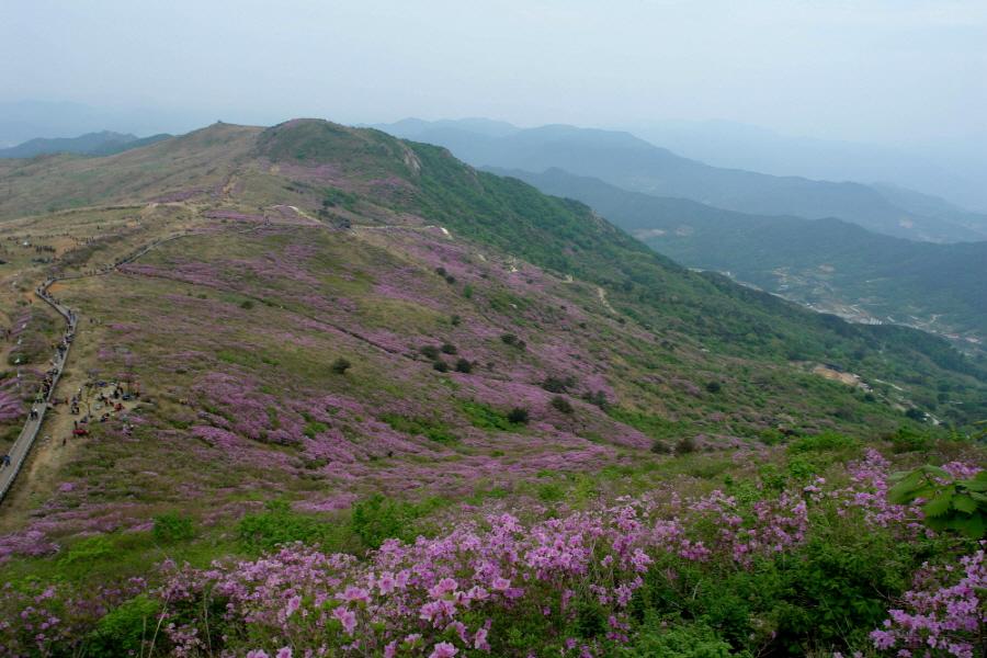 hwangmaesan-2012-05-13-1053.JPG
