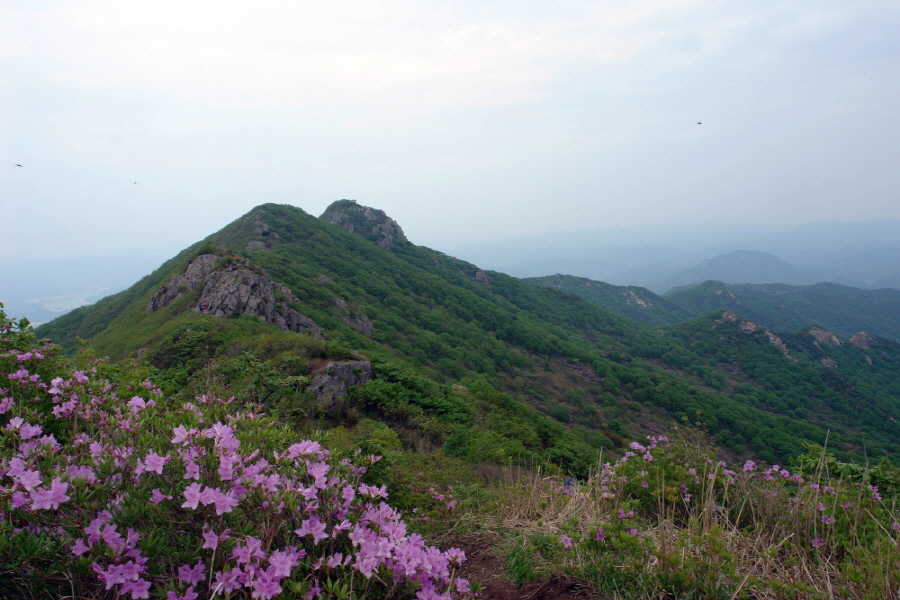 hwangmaesan-2012-05-13-1069.jpg